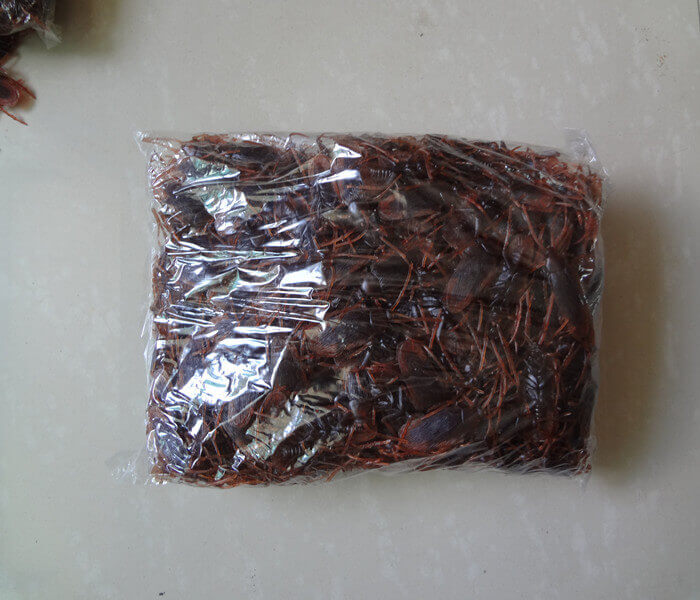 Fake Rubber Cockroaches